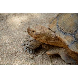 galapagos tortoise reptile animal