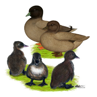 Call Duck Khaki Family