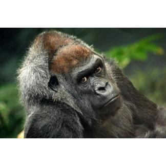 Gorilla Lierman