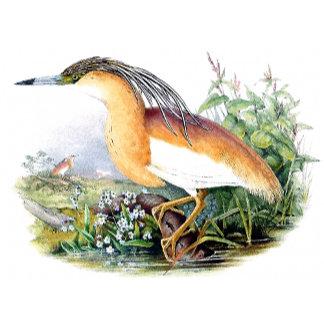 Goulds Heron Birds