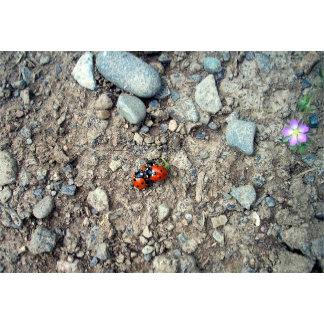 Ladybug Group Hug