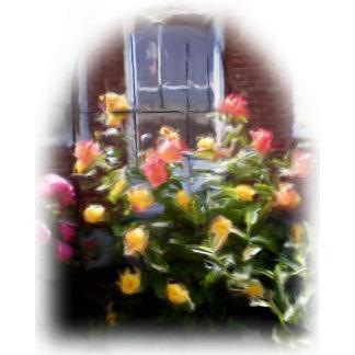 Sandra's Joseph's Coat Rose