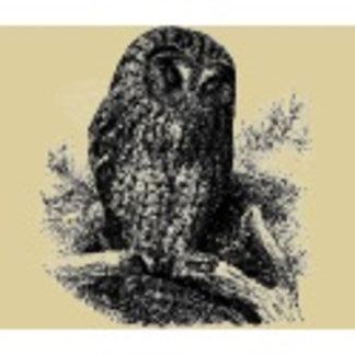 Brown Owl Sleeping