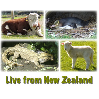 Live From New Zealand