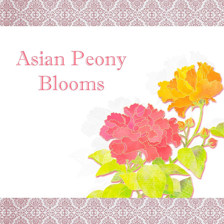 ♥ Asian Peony Blooms