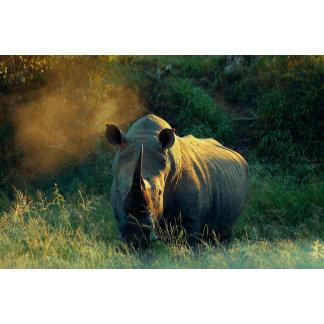 * Rhino