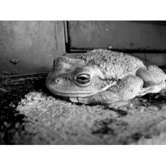 Black and white picture frog on concrete sill