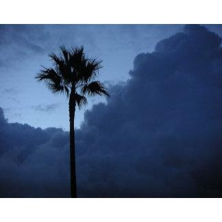 Blue Sky Lone Palm Tree