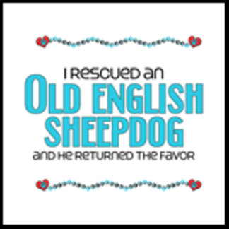 I Rescued an Old English Sheepdog (Male Dog)