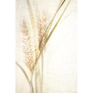 """Foxtail grasses w/sun.3 poster print"""