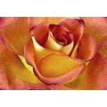 IMG_1969.rose.jpg