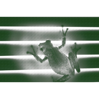 frog on blinds green sketch cool amphibian reptile