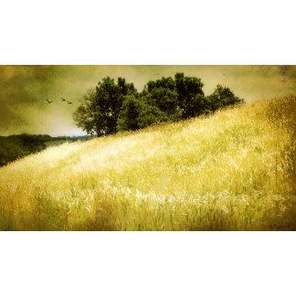 Creative Landscapes