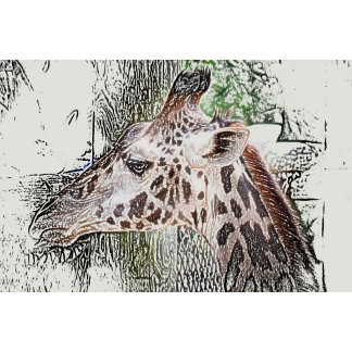 giraffe colored pencil style animal jungle sketch