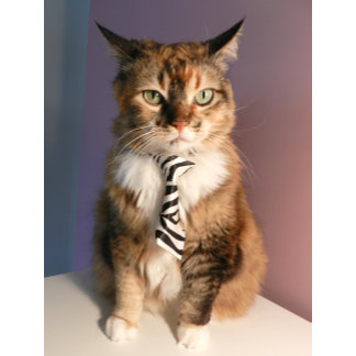Business time cat