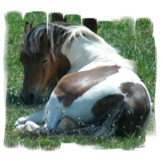 Paint Pony Resting