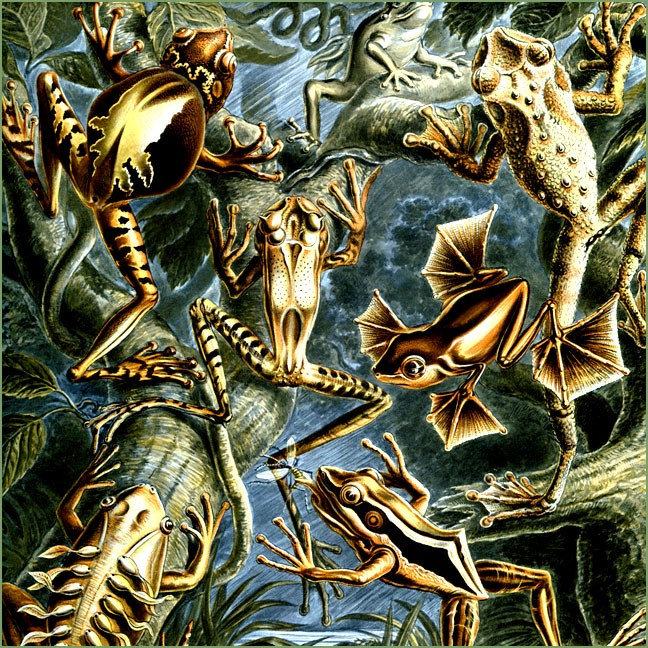 Frogs & Amphibians