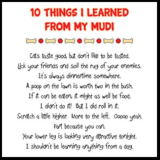 10 Things I Learned From My Mudi Joke