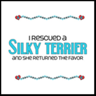 I Rescued a Silky Terrier (Female Dog)