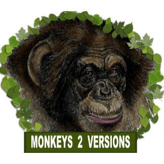 Chimpanzee (2)