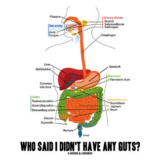 Who Said I Didn't Have Any Guts? Digestive System