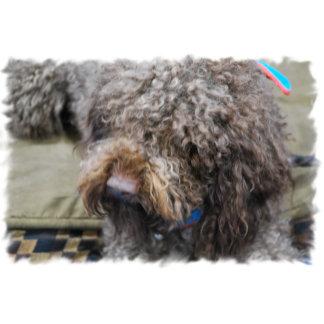 Barbet Dog