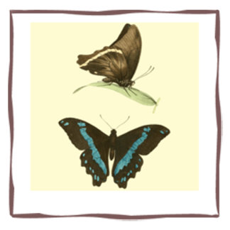 Green-banded Swallowtail Butterfly