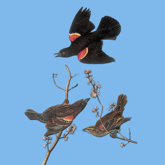 Audubon Bird Stickers