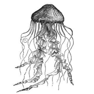 Jellyfish Design