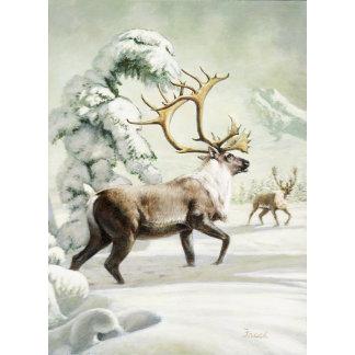 Barren-ground Caribou Frace
