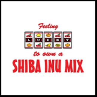 Feeling Lucky to Own a Shiba Inu Mix