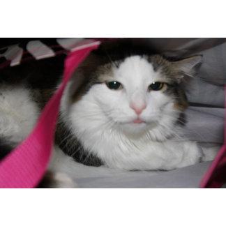 Hidden Kitty
