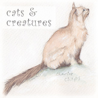 cats & creatures