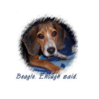 Cute Beagle Puppy With Attitude