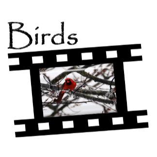 Z5 Birds