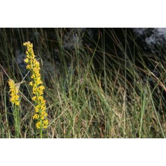 Brown green grass background image w/stalks