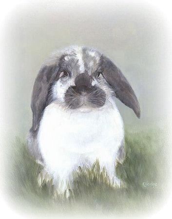 Rabbit Rescue Items