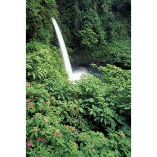 CA, Costa Rica. La Paz waterfall and impatients