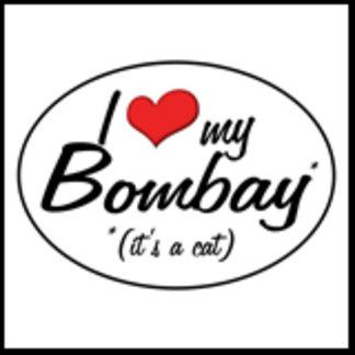 It's a Cat! I Love My Bombay