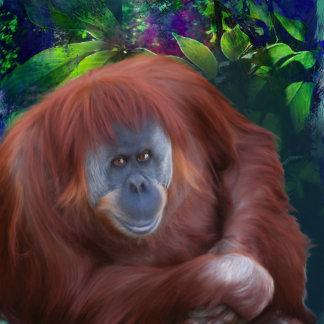"""Orangutan """"Libby's Orangutan"""""""