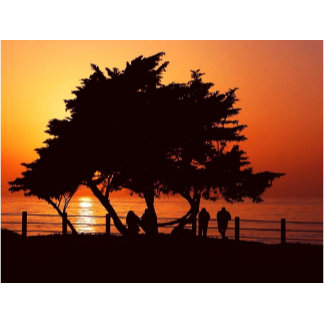 Romantic Tree Sunset