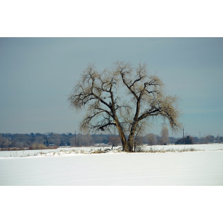 Seeds of Winter