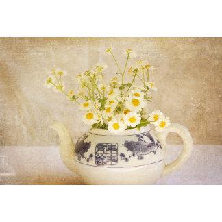 Daisies in a Teapot
