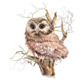 Baby Saw Whet Owl