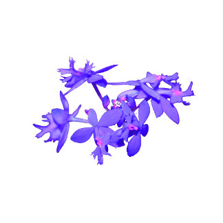 Flowers Blue Tinted Ground Orchid