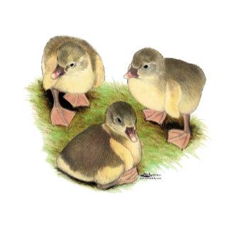 Buff Pomeranian Goslings