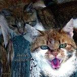 ferral cats need love too.jpg