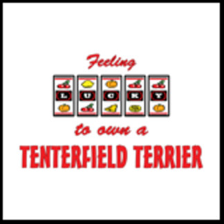 Feeling Lucky to Own a Tenterfield Terrier
