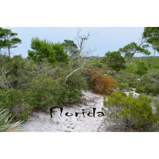 FLorida scrub land with text