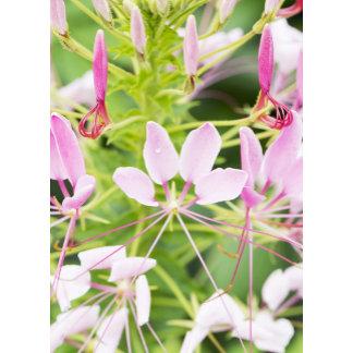 Flower Blank Cards